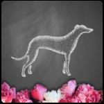 silver-hound-logo